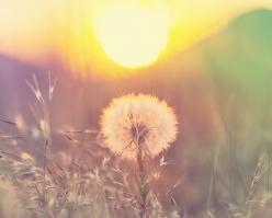 Shutterstock 188702624