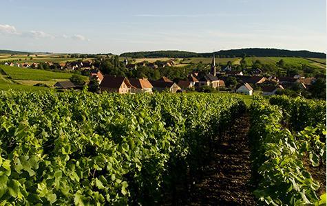 the Wissembourg region