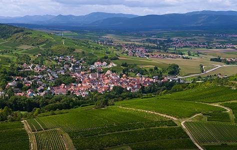 Le vignoble de Strasbourg