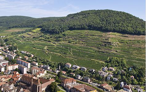 The Wine Route in southern Alsace