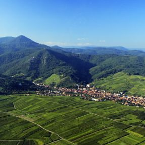 A glimpse at the Alsace wine-growing area