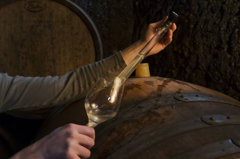 7554-vinificationzvardon-conseilvinsalsace