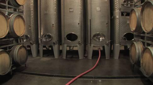 Vinification vins tranquilles-048