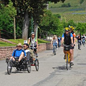 SlowUp along the Alsace Wine Route