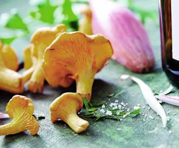 Girolle mushroom