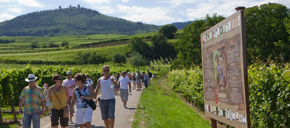 circuit de la route des vins d'Alsace