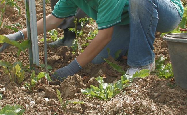 土壌環境の維持