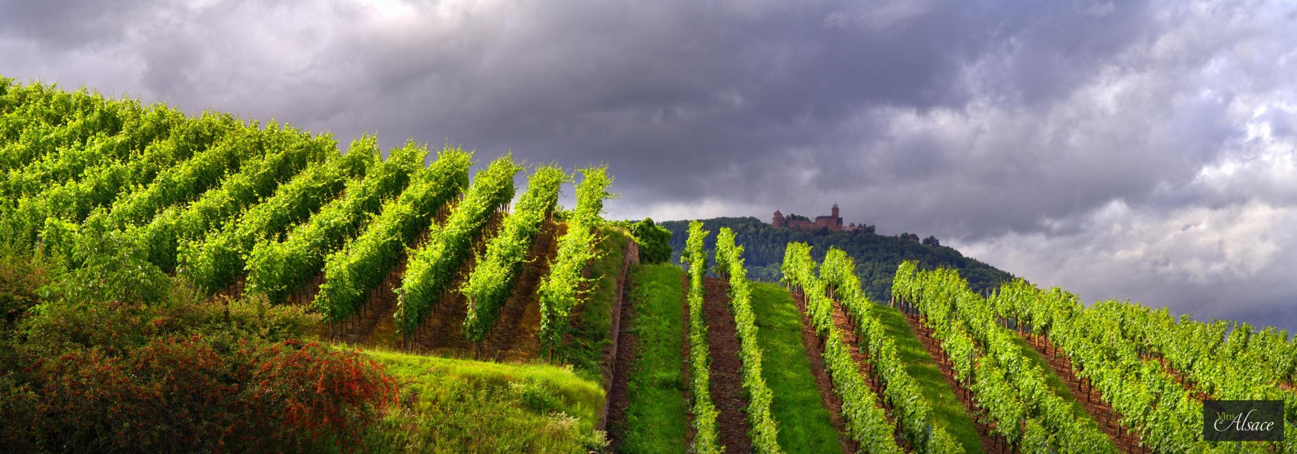 Images Et Fonds Décran Du Vin Et De La Vigne Vins Dalsace